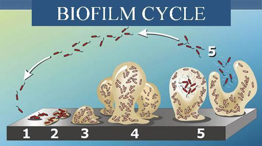 Compounds for the disruption of biofilms