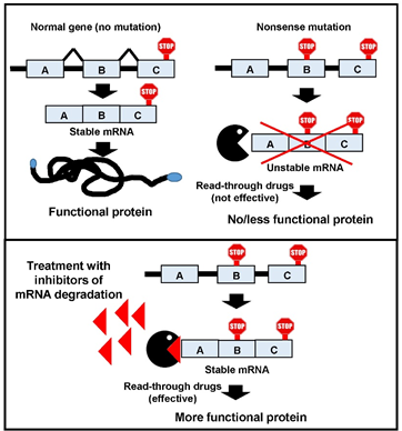 A Novel Target for Treatment of Rare Genetic Diseases Caused by Nonsense Mutations