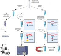 A simultaneous detection system of chromosomal alterations by sequencing, cytometry and imaging