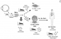 In vitro method for detecting tumor growth and diagnosing or prognosticating the risk of metastasis in a human subject that has been diagnosed with uveal melanoma