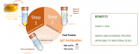 Immunoglobulin Y Purification, Its Products And Uses